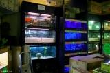 Návštěva akvaristiky v Edinburghu