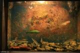 Akvárium Dubrovník