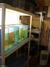 Akvaristika Polešovice